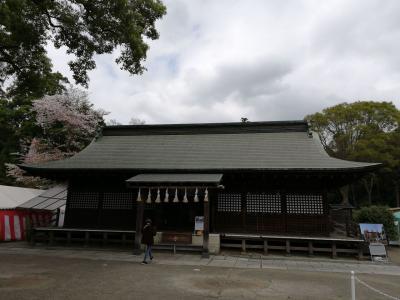 鷲宮神社で桜とコラボ