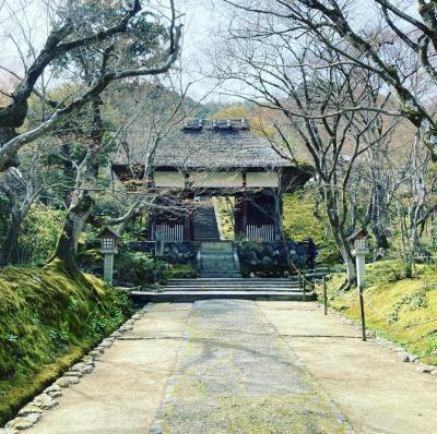 春の京都 ちゅんとマスク旅。