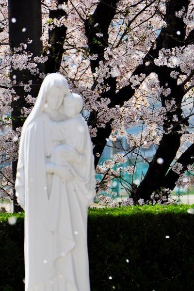 日本3大修道院 多治見修道院とさくら