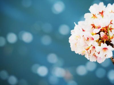 2021年3月桜<富岡八幡宮・大横川桜クルーズ・深川不動堂>