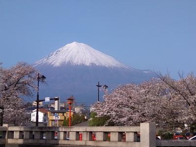 母を連れてお花見ドライブ 富士宮前半