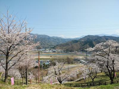 山梨2021桜 【3】大法師公園