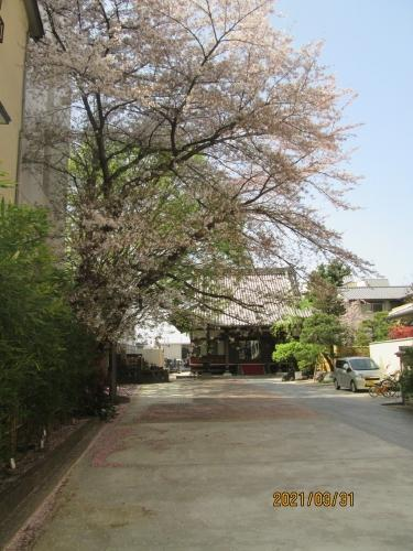 松戸市の松戸・西蓮寺・石仏