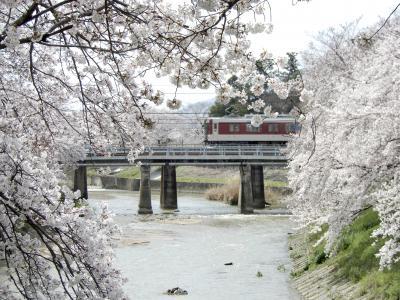曽我川(奈良)の桜並木  The定番!日本の春の情景