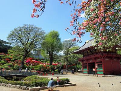 2021年4月 根津神社