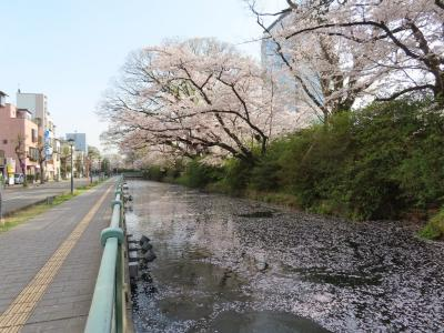 八高線に乗って再び高崎へ&高崎城跡・三ツ寺公園で花見 2021/04/01