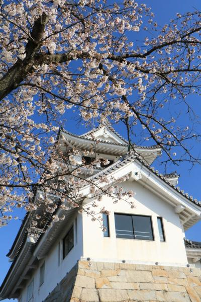 満開近い桜お花見トリップ♪ 新境川の桜と電車、乗り鉄と撮り鉄♪&墨俣一夜城♪ 一日目