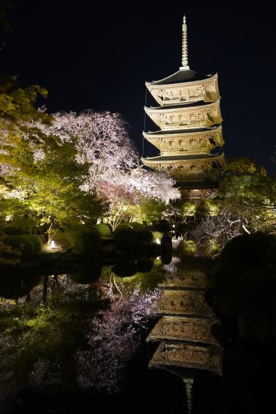 20210401-5 京都 東寺のライトアップ…不二桜見たさに、また拝観料をお納めして
