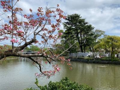 鎌倉へ やっと初詣が出来ました。