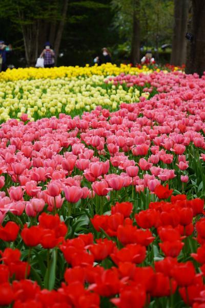 20210402-4 京都 京都府立植物園は、桜だけやなくて、春の花盛りね