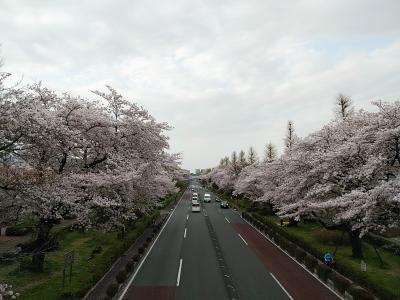 東京2021桜 【2】国立