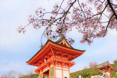 京都桜めぐり③ 清水寺夜の特別拝観と京都で感じる世界