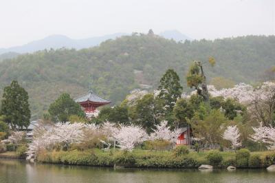 やっぱり!京の桜の巻(参) 北嵯峨野
