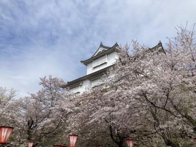 岡山の桜めぐり津山-周匝-建部-後楽園