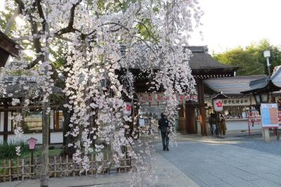 2021桜の咲く頃関西へ 京都編