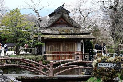 桜と忍野八海,富士山は無し