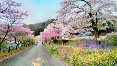 上州は桜満開!わたらせ渓谷鉄道と伊香保グリーン牧場でお花見@日帰りバスツアーの巻