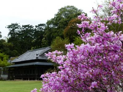 「つつじが岡第二公園」のサクラとツツジ_2021_サクラは散り進み、ツツジは咲き始め(群馬県・館林市)