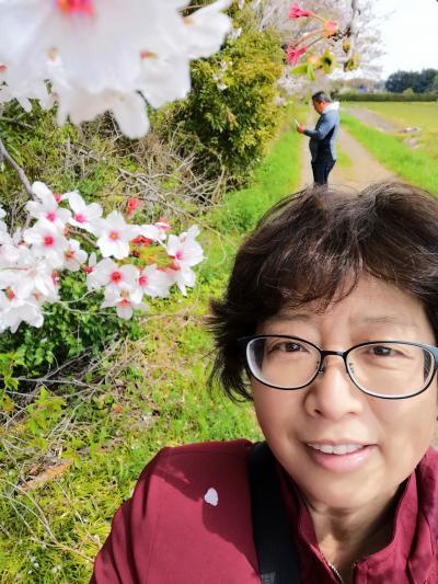 桜散歩2021 鎌ケ谷~今井の桜 その3