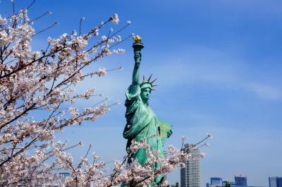 埋立地だと思って侮るなかれ、桜とチューリップのコラボだって見れるんです! in お台場