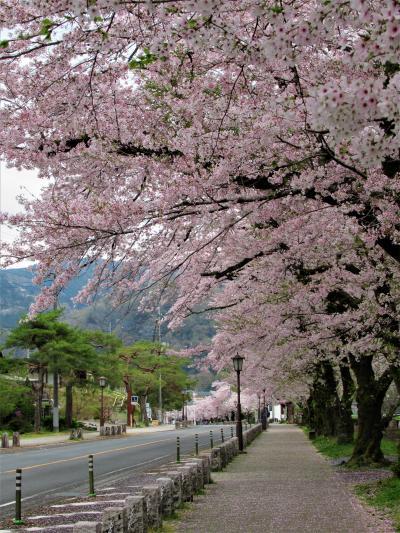 秩父② 満開の長瀞桜巡り 「宝登山神社」と「北桜通り」、そしてライトアップも