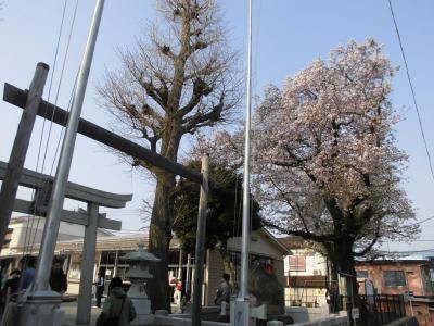 平成最後の桜を見に寺社巡り