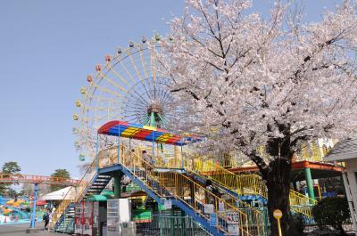 華蔵寺公園の 桜 と遊園地