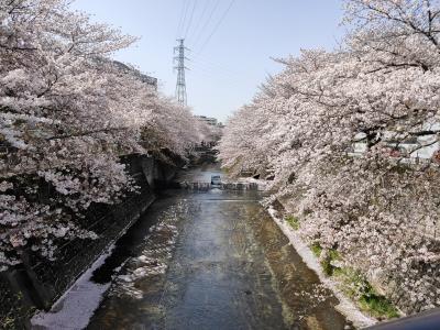 少しずつ人が戻ってきた街に桜が舞い散る