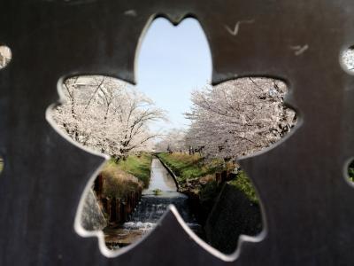 花見三昧…竜泉寺川の桜並木と伊賀川桜堤