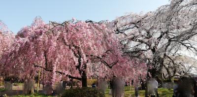 仙台 慈眼寺  2021年4月