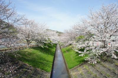 2021春を楽しむ 伊豆・箱根旅行