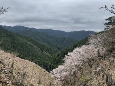 青のシンフォニーで吉野奥千本 西行をしのぶハイキングの旅