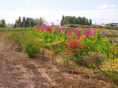 花と新緑の南永井の風景①