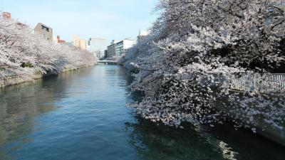 東京散歩 - 深川地域、門前仲町の桜