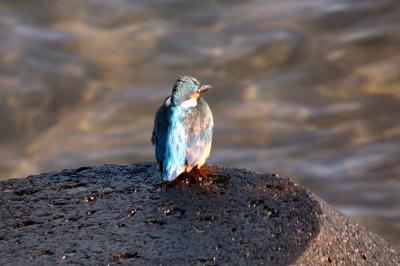 年末年始のエクシブ8連泊 エクシブ湯河原離宮 湯河原海浜公園の散歩道