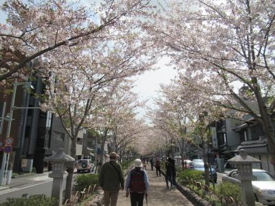 桜は終わりかけ、鎌倉散歩。