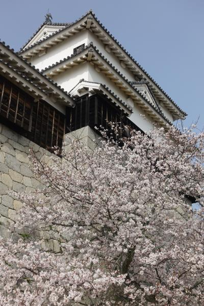 【2泊3日 春の愛媛 ひとり旅】お城と桜と橋と鯉!の巻 1