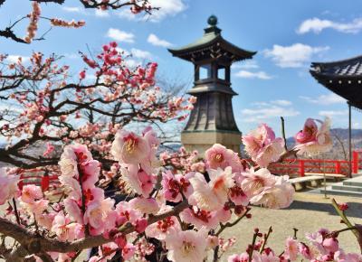 春の兆し感じる梅満開の中山寺&清荒神へお参り♪