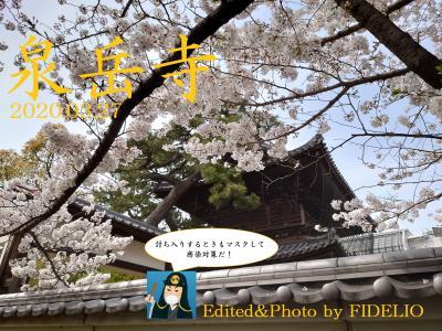 《外伝》東京・泉岳寺 春うらら日記 ~四十七士の眠る場所に咲く満開の桜~
