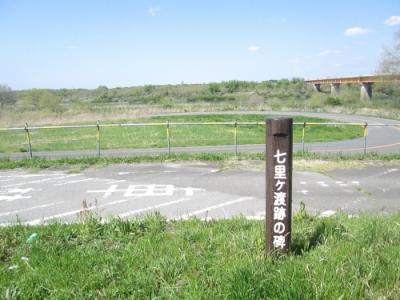 柏市の利根川堤・七里ヶ渡・菜の花