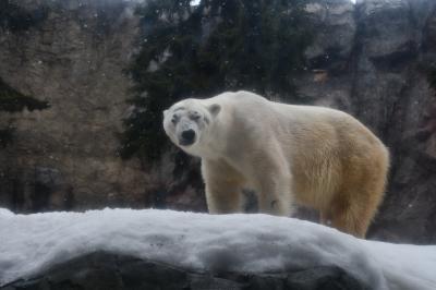 動物が間近に迫ってくる旭山動物園