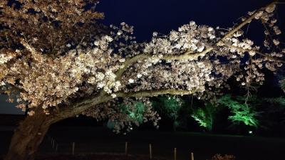 桜とオープンしたばかりのフォションホテル京都でランチを楽しむ日帰り小旅行