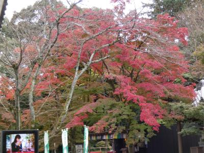 滋賀 大津 三井寺 中院南部(Nakanoin South, Miidera Temple, Otsu, Shiga, JP)