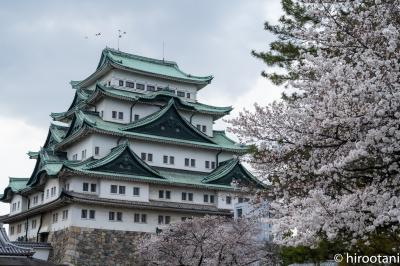 2021 名古屋城の桜