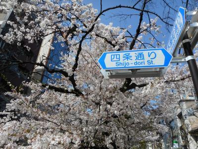 満開の桜見物