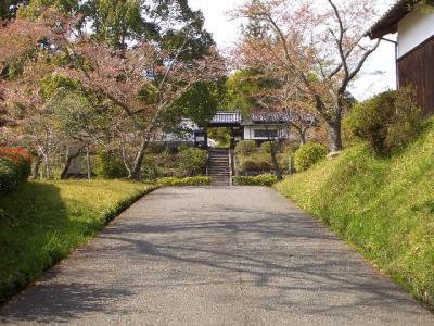 奈良桜たより 柳生の里 2021