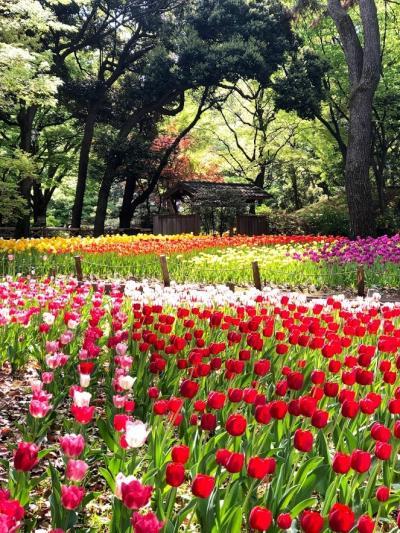 ガーデンネックレス横浜 花さんぽ 横浜公園 日本大通 山下公園 赤レンガ倉庫を歩く