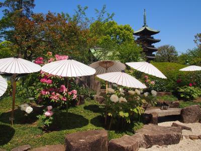 2021年4月 上野公園 東照宮牡丹苑