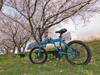 自転車でGO! 2021.03.31 =桜を見ながら沼津まで走りました=