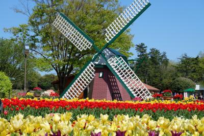 春のうきうきフェア♪その2 ~県立フラワーセンター・四季の花壇から彫刻の道~